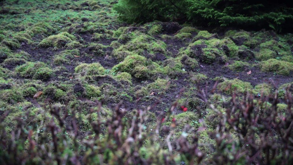 Jardin après le passage de sangliers. Les dégâts sont estimés à plusieurs milliers d'euros.