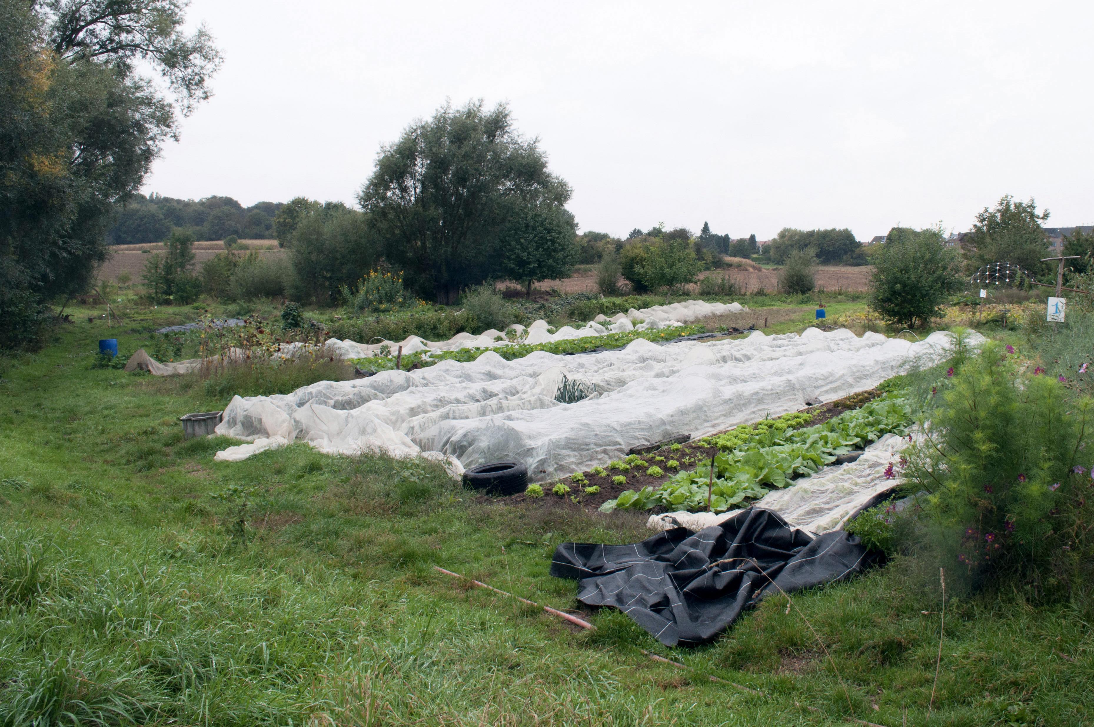 Parcelles cultivées