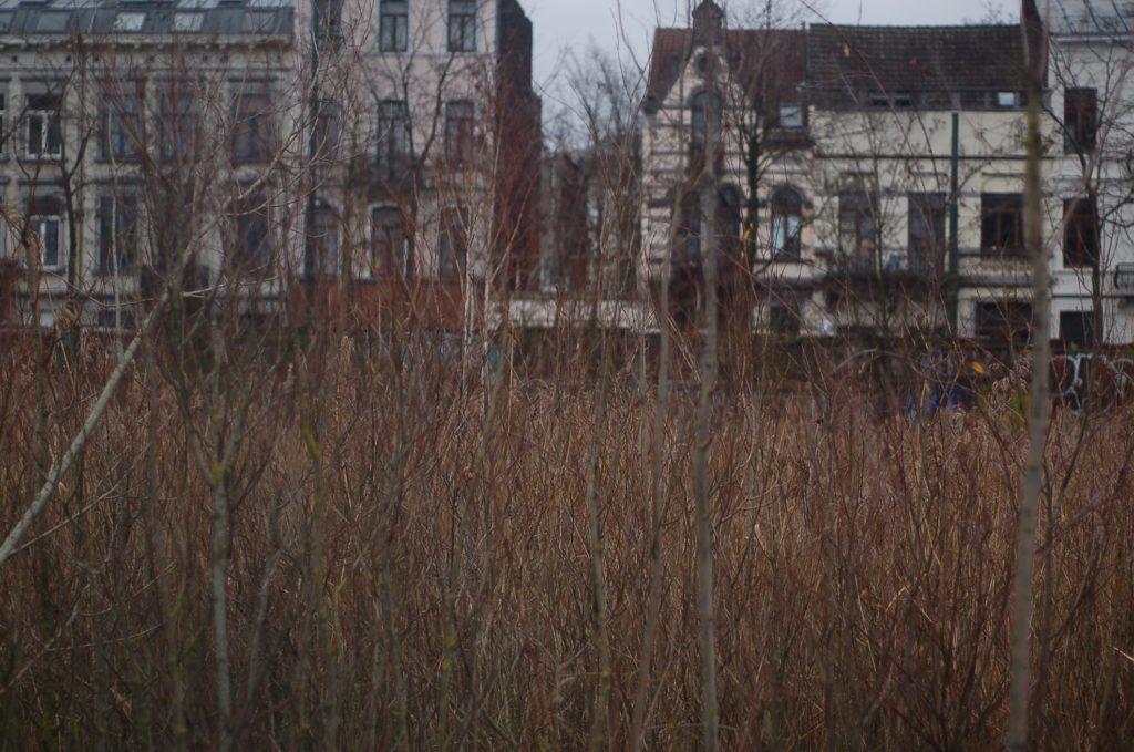 La roselière et le quartier résidentiel en arrière plan